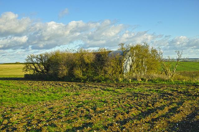 The Barn in the Trees - November