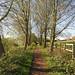 Footpath alongside the Chelmer near Chelmsford, Essex