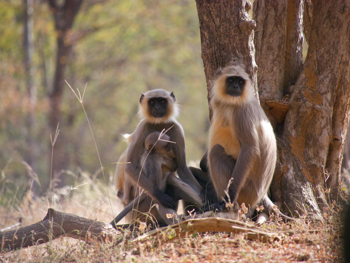 116-India-Ranthambore