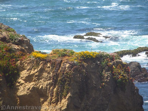 A clifftop swathed in flowers along the Coastal Trail south of Glass Beach, California