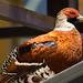 Partridge profile by quinet