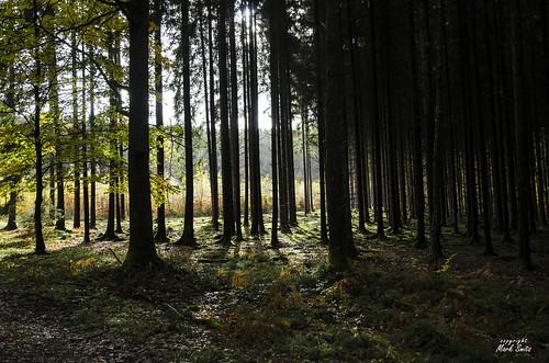 Belgium - Ardennes - Forest Light en Dark