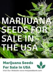 MARIJUANA SEEDS FOR SALE IN THE USA