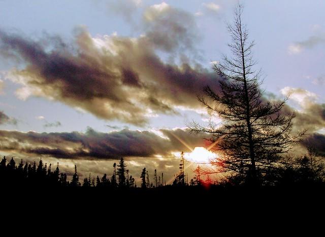 Sunburst in the boreal, Sony DSC-T90