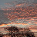colourful evening sky [explored] by carol_malky