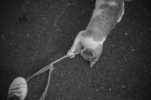 A cat playing with a string