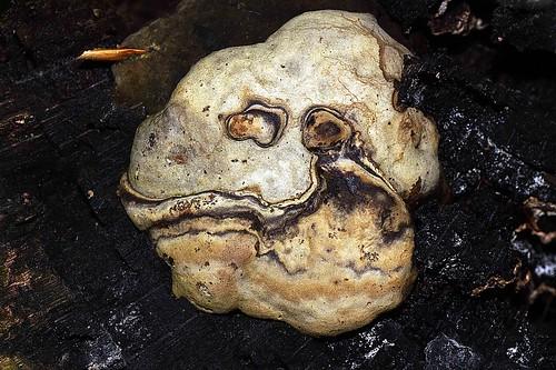 Friday mushroom-face