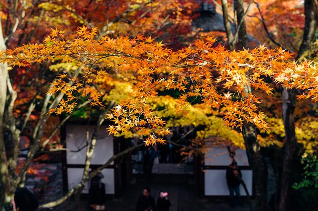 Kyoto_Jyojyakko-ji_07