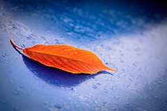 Autumn Drops - Photo of Carnas