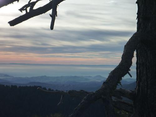 sequoia national park forest buena vista peak