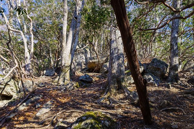 露岩の斜面を直登