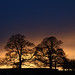 Broughton Hall trees by Quality BoB