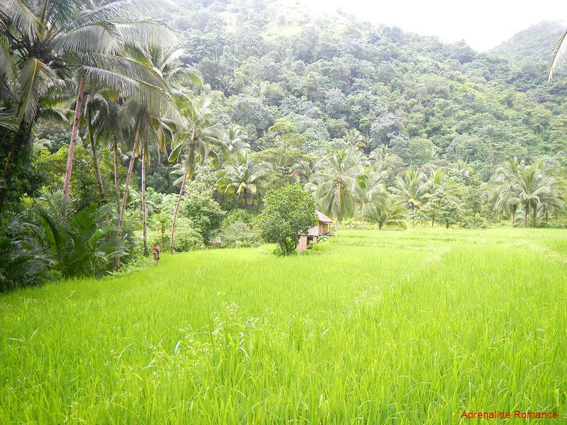 Tibiao Rice Fields