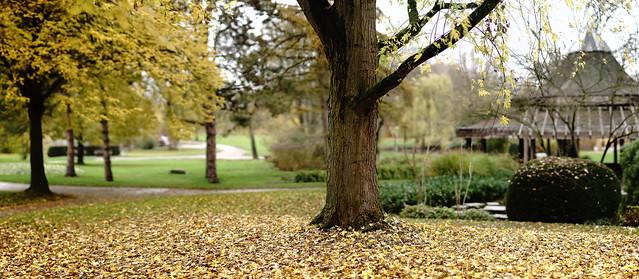 late autumn@Südpark, Heilbronn, Germany