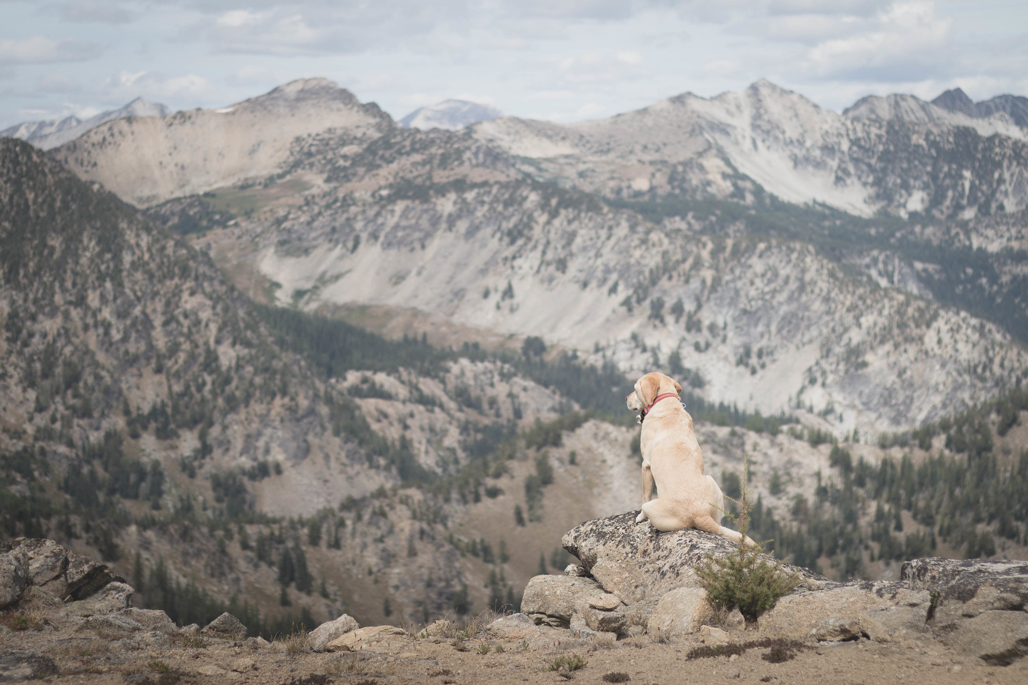 Summit dogs on North Navarre Peak
