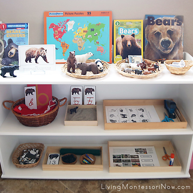 Montessori Shelves with Bear-Themed Activities