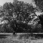 Paisatge amb arbre