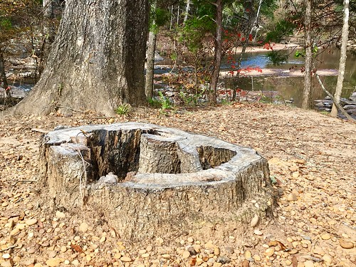 Stump, Hurricane Creek Park, Tuscaloosa, Alabama.