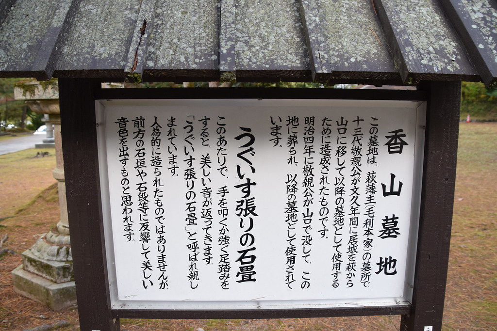 11 04 NIKON D3300 6000x4000