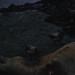 Small photo of Skuas feed on sea elephant carcase. Macquarie