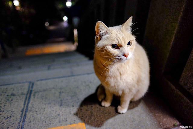 【東北路行記】五、Fujifilm X-T1 |14