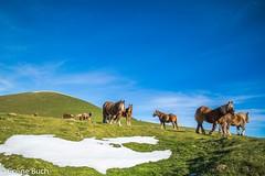 Mes amis (Altitude 1350 m)