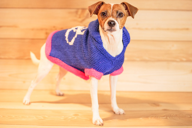 Flyball Christmas Sweater-6930
