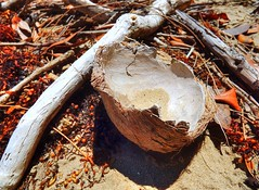 Coconut remnants on the beach