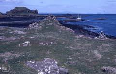 Low Herring gullery, north west Lunga, Treshnish, across seaweed from boat. Cairn guiding back to boat.
