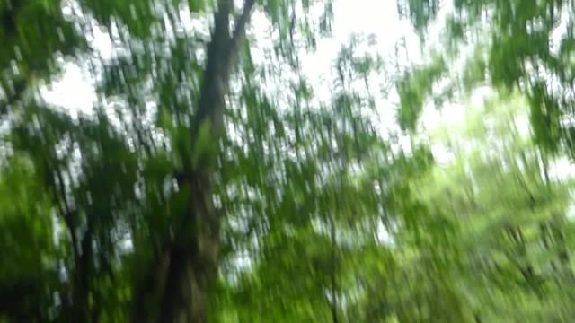 laute Bäume - Bogor Botanischer Garten