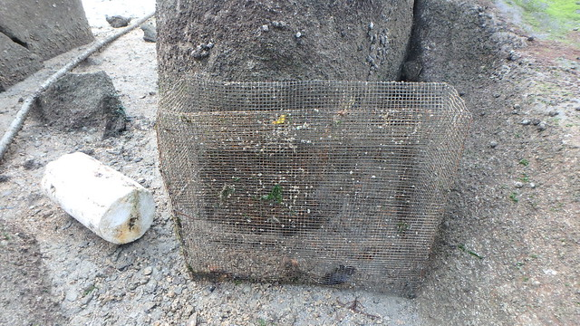 Fish trap on living rocky shore