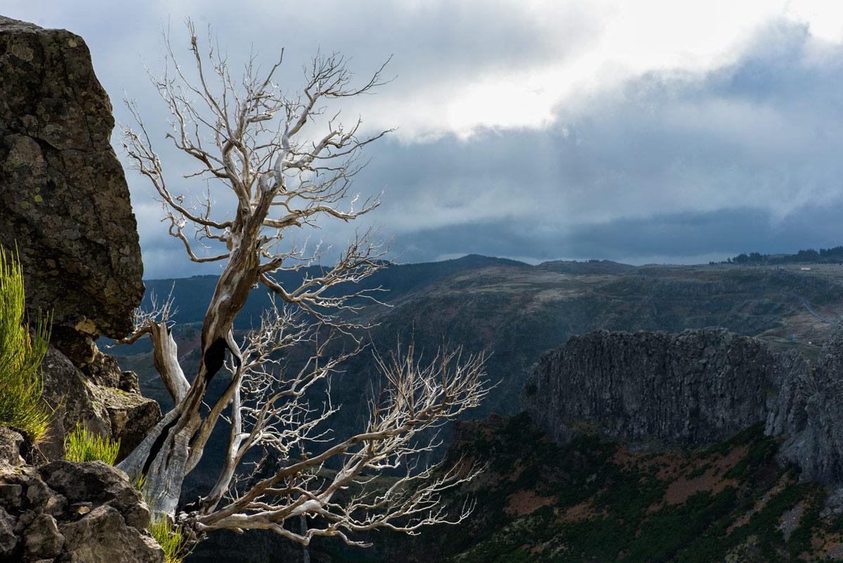 Ветка-в-горах_DSC09338