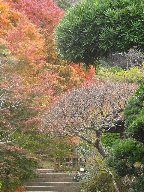 17.11.30 初冬の鎌倉、紅葉の寺院。Erly winter, Temples in Kamakura Japan. http://mitch1.blog.so-net.ne.jp/2017-12-05-3