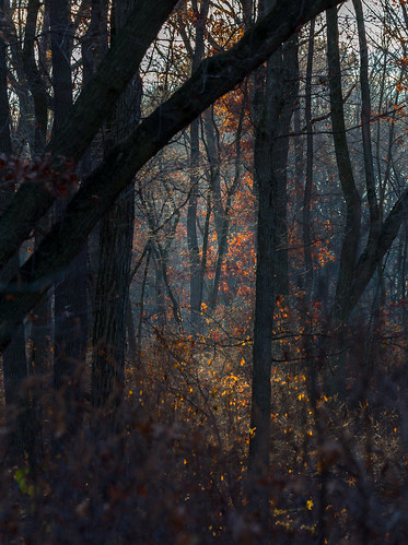 woodland trees landscape woods dawn morning dallenbach nature eastbrunswick sunlight forest newjersey unitedstates us