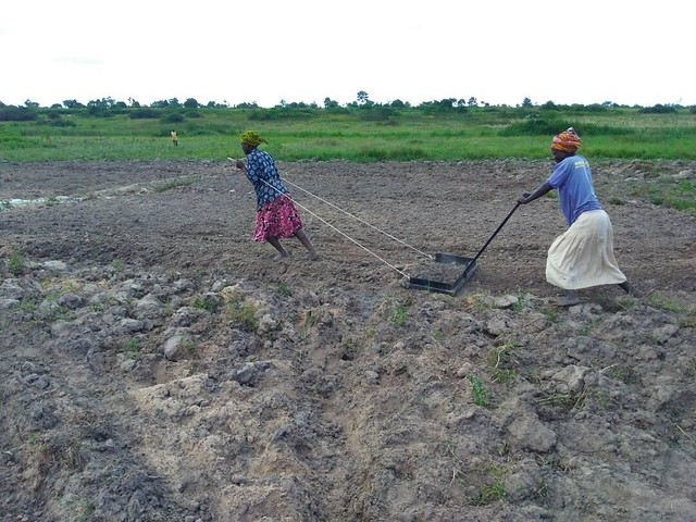 Two farmers at Aloet site use a manual land-leveling machine to even the land prior to making furrows, designed by interns Felister Arao, Suzan Akwi, and Dorothy Ayapo.