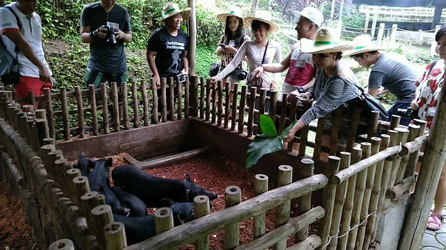 adventure farm timberland heights san mateo rizal pig pen