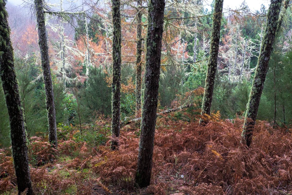 Причудливый-лес_DSC09494