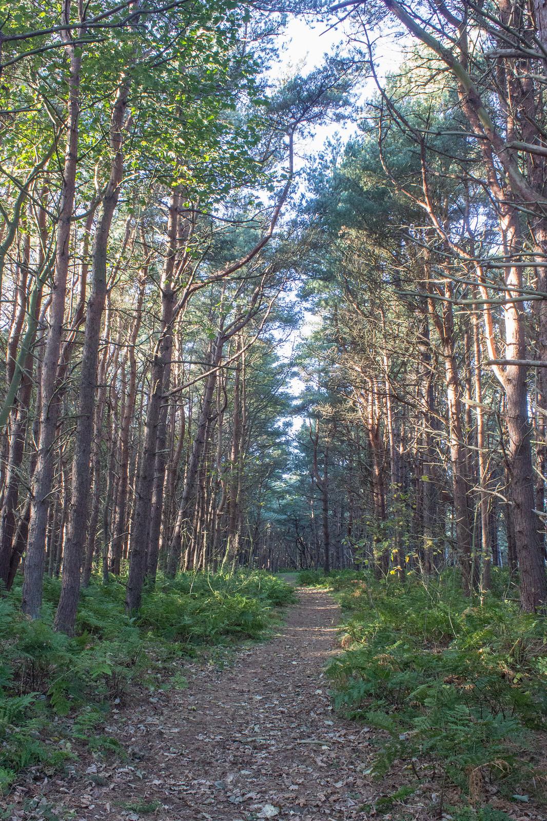 Tyninghame woodland