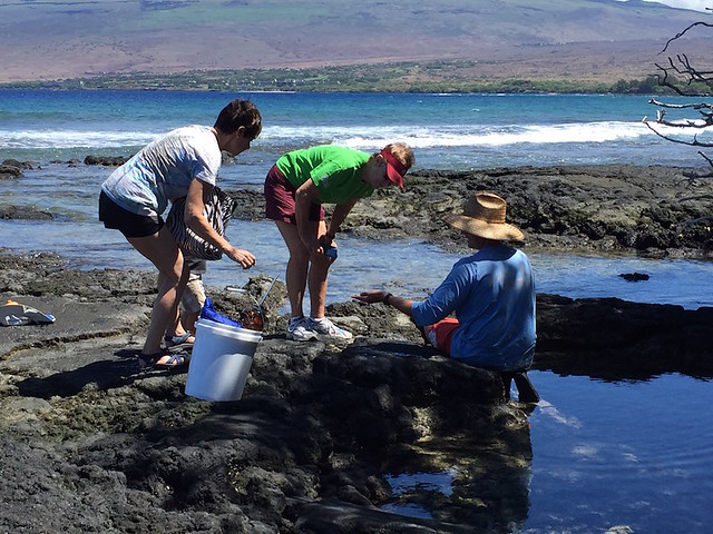Puako Reef and Tidepool Exploration 9/23/17