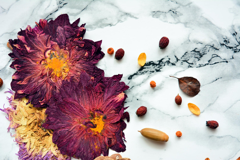 frunze si flori uscate