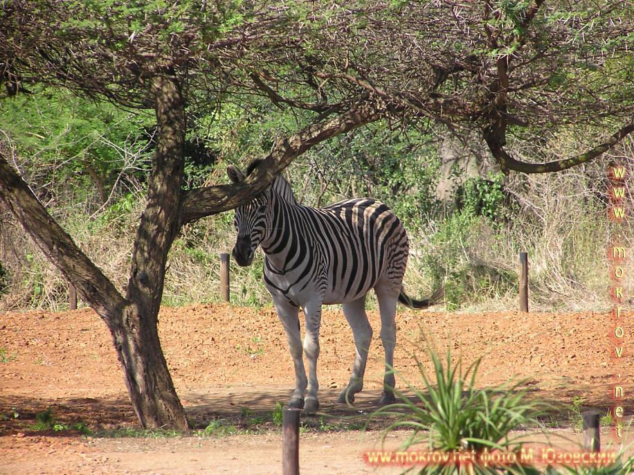 Национальный Парк Крюгера ЮАР  (1)