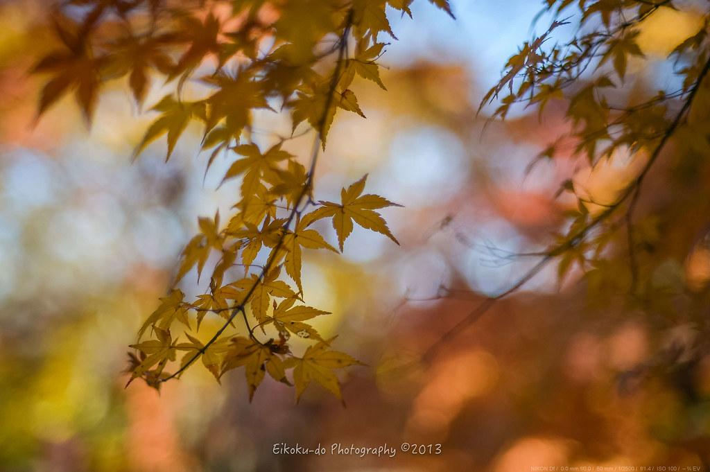 松戸本土寺の秋