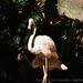 <p><a href=&quot;http://www.flickr.com/people/140820502@N08/&quot;>exploreslk</a> posted a photo:</p>&#xA;&#xA;<p><a href=&quot;http://www.flickr.com/photos/140820502@N08/38119464995/&quot; title=&quot;Large Herons&quot;><img src=&quot;http://farm5.staticflickr.com/4585/38119464995_08824bb884_m.jpg&quot; width=&quot;240&quot; height=&quot;160&quot; alt=&quot;Large Herons&quot; /></a></p>&#xA;&#xA;<p>Click to read more on <a href=&quot;http://exploreslk.com/dehiwala-zoo/&quot; rel=&quot;nofollow&quot;>Dehiwala Zoo</a>. <br />&#xA;<br />&#xA;Feel free to use this image, but give credits to <a href=&quot;http://exploreslk.com/&quot; rel=&quot;nofollow&quot;>exploreslk.com</a>.</p>