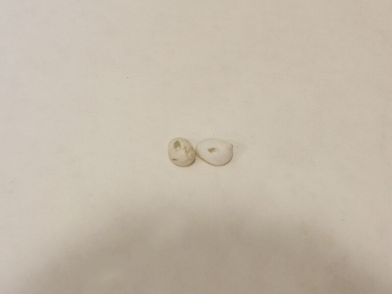 two shells with holes