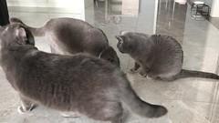 4 Babies and Catnip