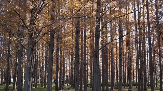 DSC05910水元公園