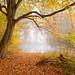 autumn by Czesiek K.