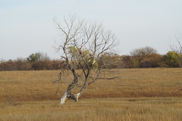 Old Tree in a Meadow