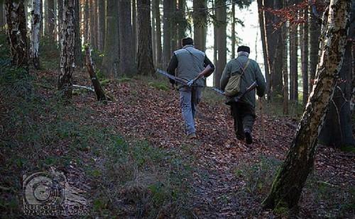 Підряд для лісників, абоХтополюватиме наугіддяхМлинівщини?