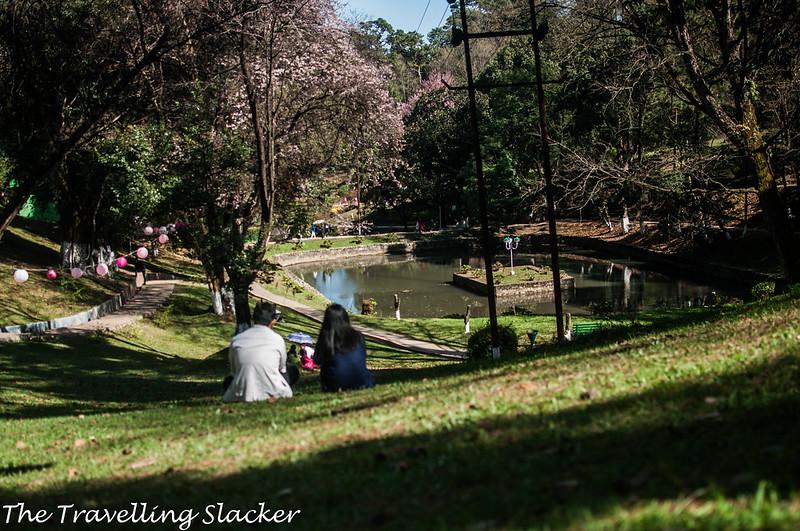 Shillong Cherry (27)